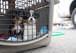 Evacuating with pets can be stressful & chaotic. Make sure you have everything you need!