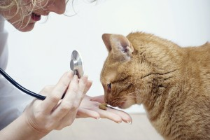 cat-vet