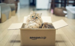 cat_fluffy_box_66380_1920x1200-700x437