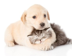 puppy_kitten_care