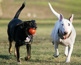 how-to-protect-your-dog-from-fleas-and-ticks-at-the-dog-park