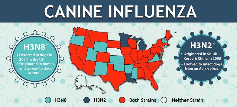 web-influenza1
