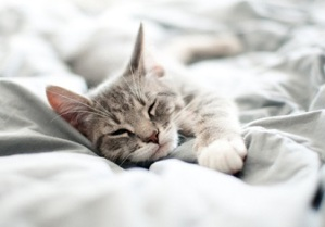 a-gray-kitten-asleep-in-a-bed