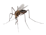 kisspng-mosquito-insect-mosquitoes-insects-5a8089cadd8e94.9340606815183733229075