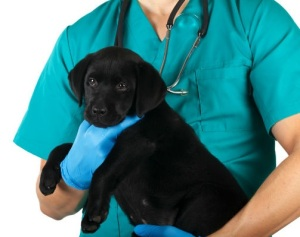 puppy-diarrhea-vet