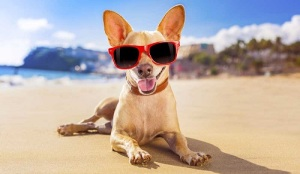 Dog-on-beach-with-sunglasses_ThinkstockPhotos-518565035