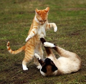 Understand Why Cats Fight